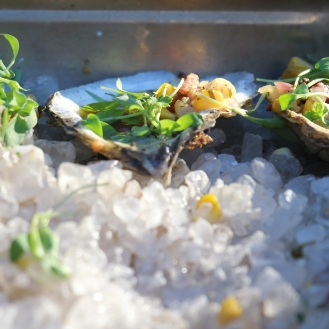 Grilled Bluff Hill Cove Oysters with corn and tomato: White Horse Tavern